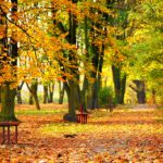 Autumn – What to do