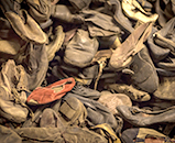 A picture of dozens of shoes belonging to those killed at Auschwitz