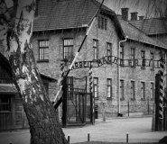 Auschwitz  & Salt Mine One Day Tour